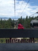 Tahoe.Ovation Bear 1